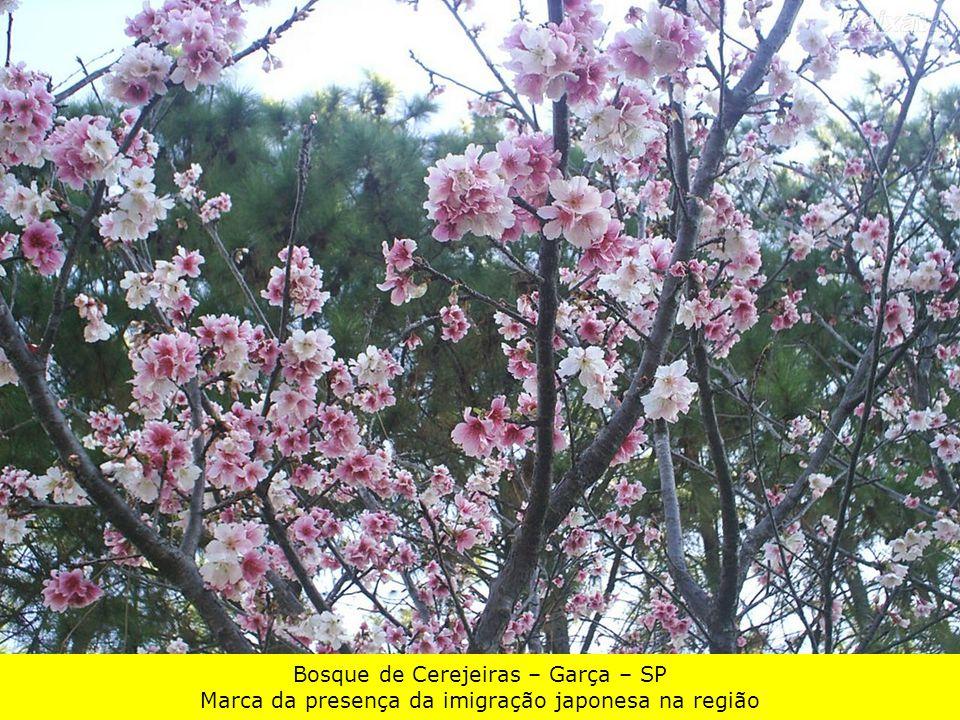 Bosque de Cerejeiras – Garça – SP Marca da presença da imigração japonesa na região