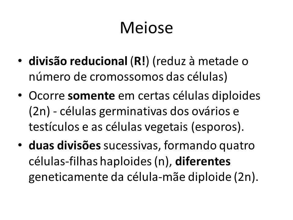 Meiose divisão reducional (R!) (reduz à metade o número de cromossomos das células)