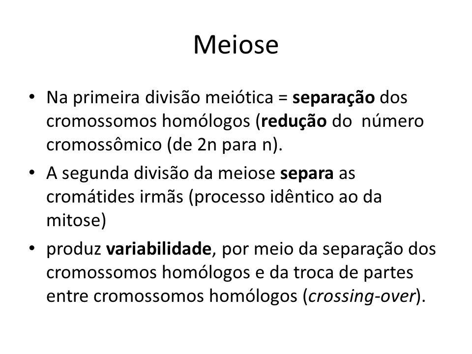 Meiose Na primeira divisão meiótica = separação dos cromossomos homólogos (redução do número cromossômico (de 2n para n).