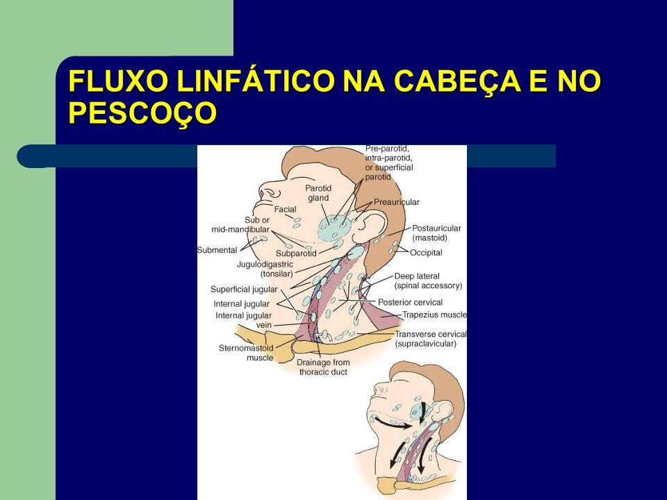 FLUXO LINFÁTICO NA CABEÇA E NO PESCOÇO