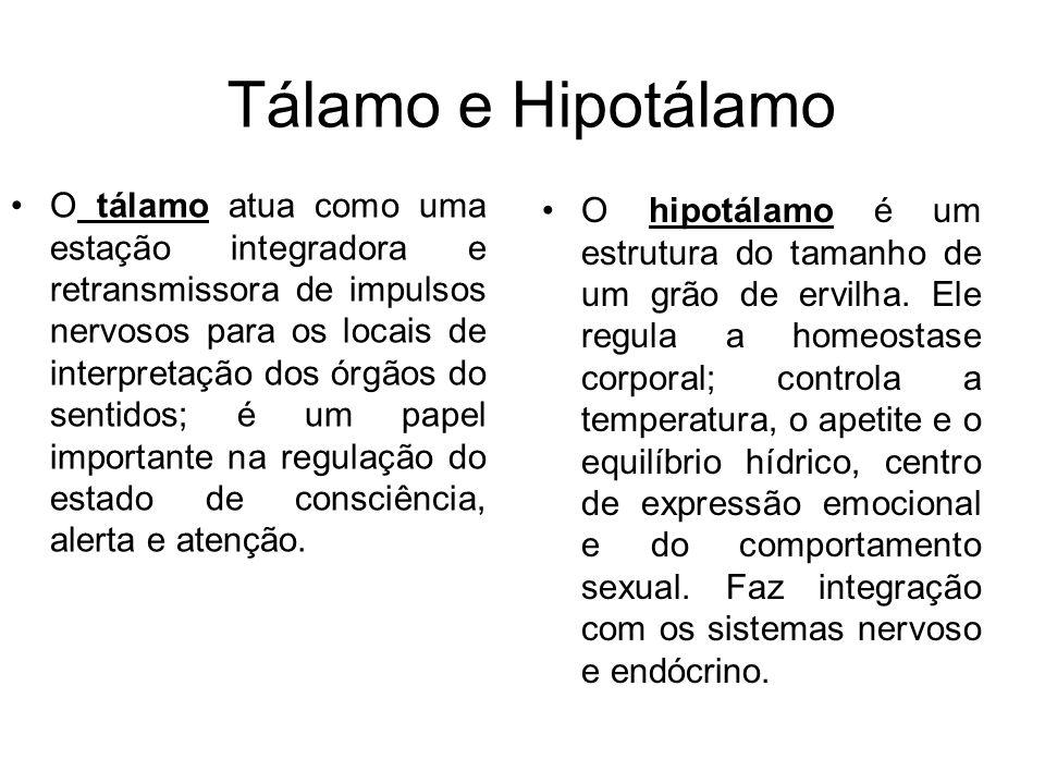 Tálamo e Hipotálamo