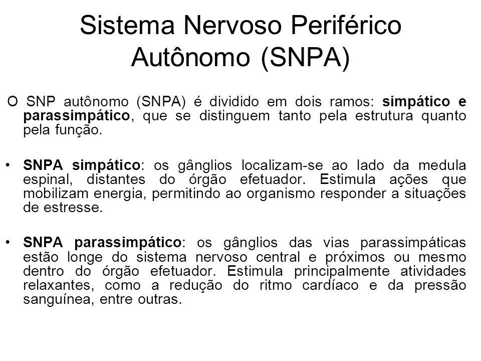 Sistema Nervoso Periférico Autônomo (SNPA)