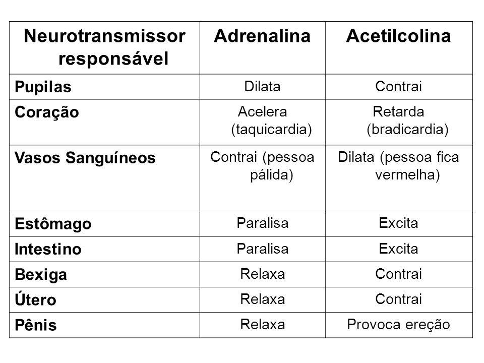 Neurotransmissor responsável