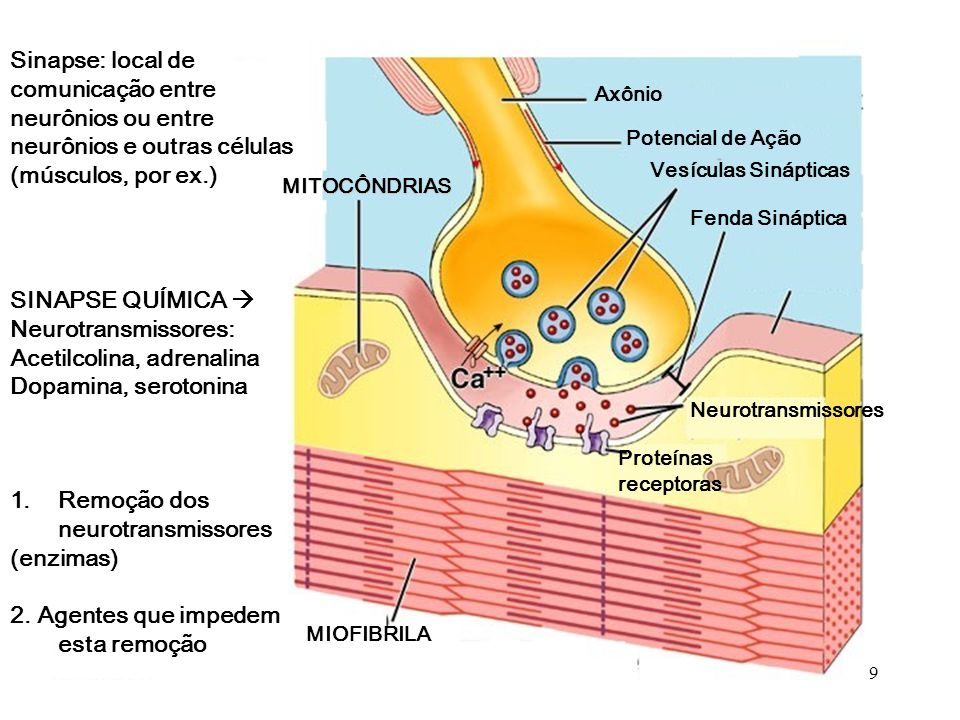 Acetilcolina, adrenalina Dopamina, serotonina