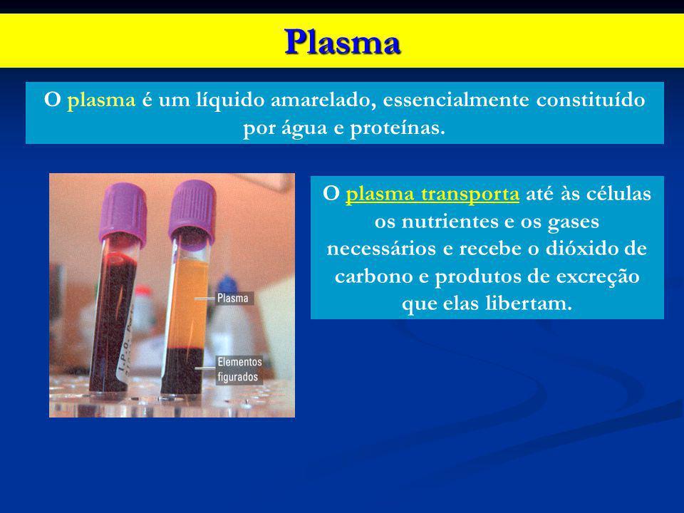 Plasma O plasma é um líquido amarelado, essencialmente constituído por água e proteínas.