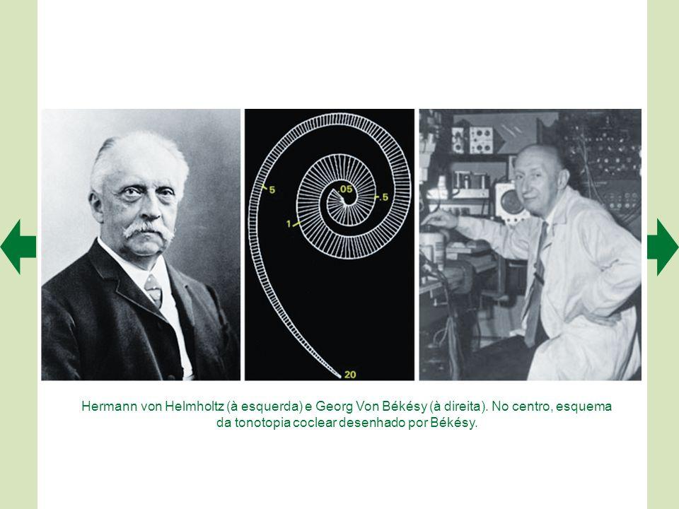 Hermann von Helmholtz (à esquerda) e Georg Von Békésy (à direita)