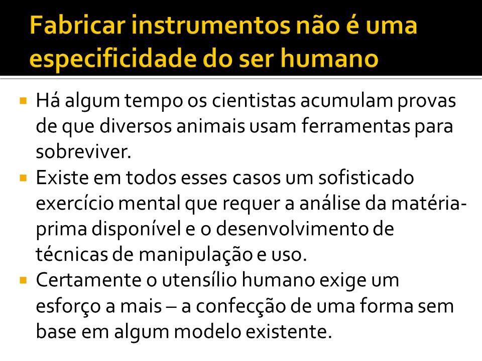 Fabricar instrumentos não é uma especificidade do ser humano
