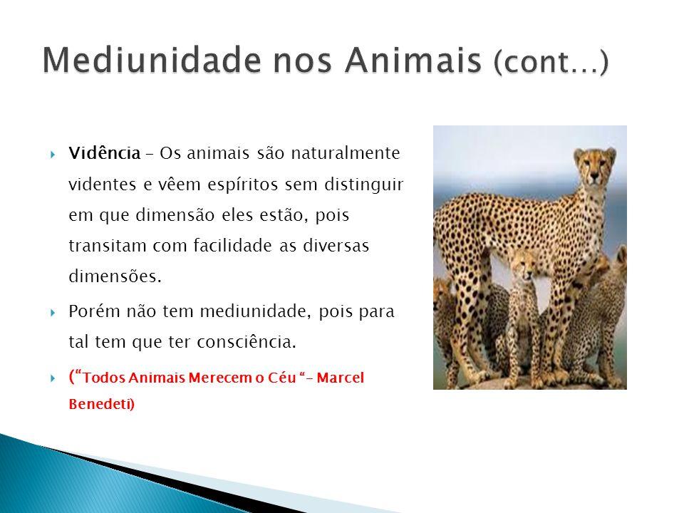 Mediunidade nos Animais (cont…)