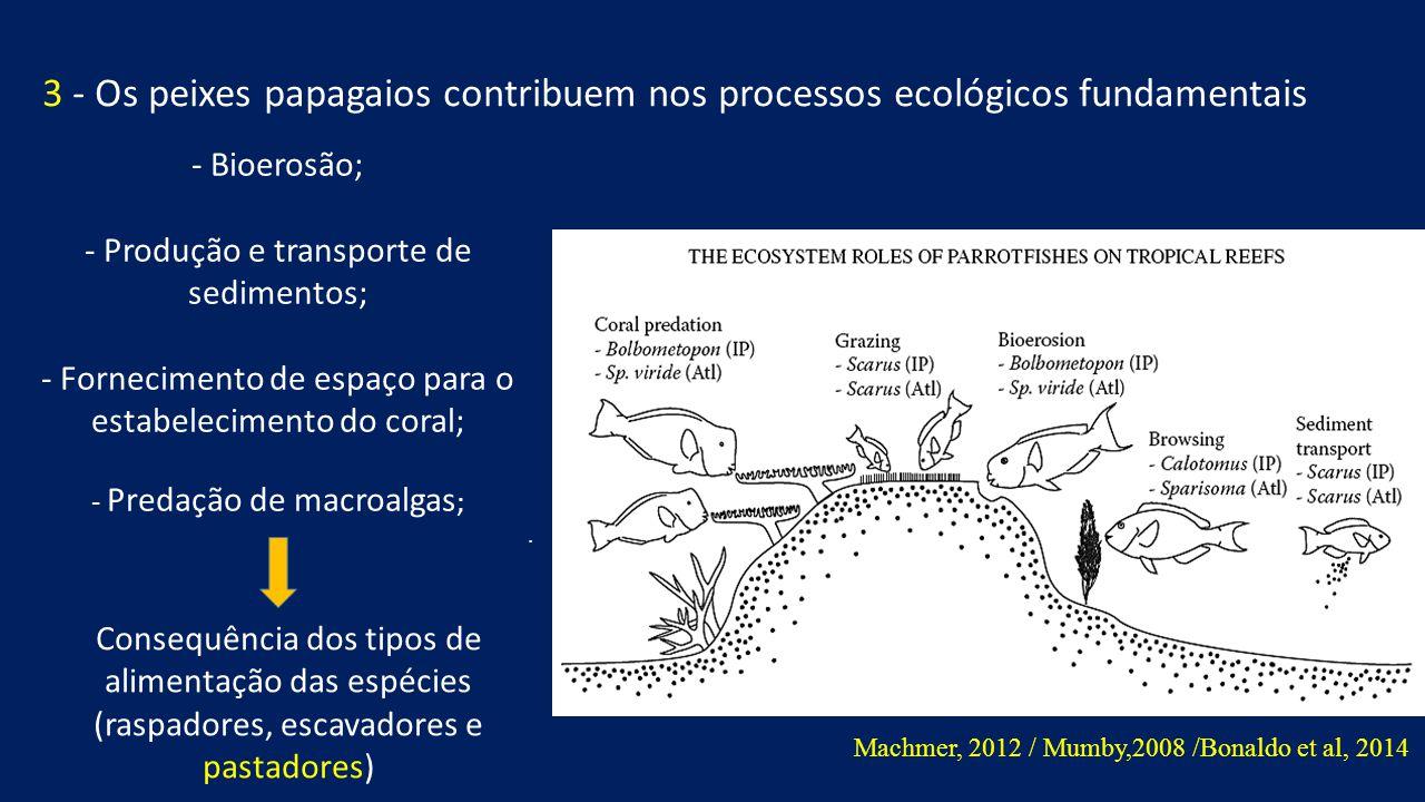 3 - Os peixes papagaios contribuem nos processos ecológicos fundamentais