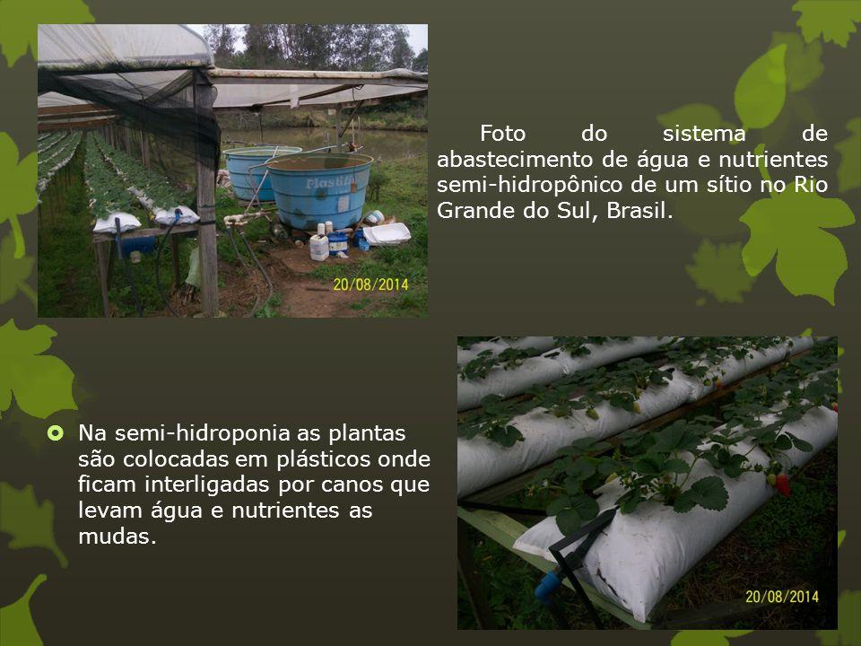 Foto do sistema de abastecimento de água e nutrientes semi-hidropônico de um sítio no Rio Grande do Sul, Brasil.