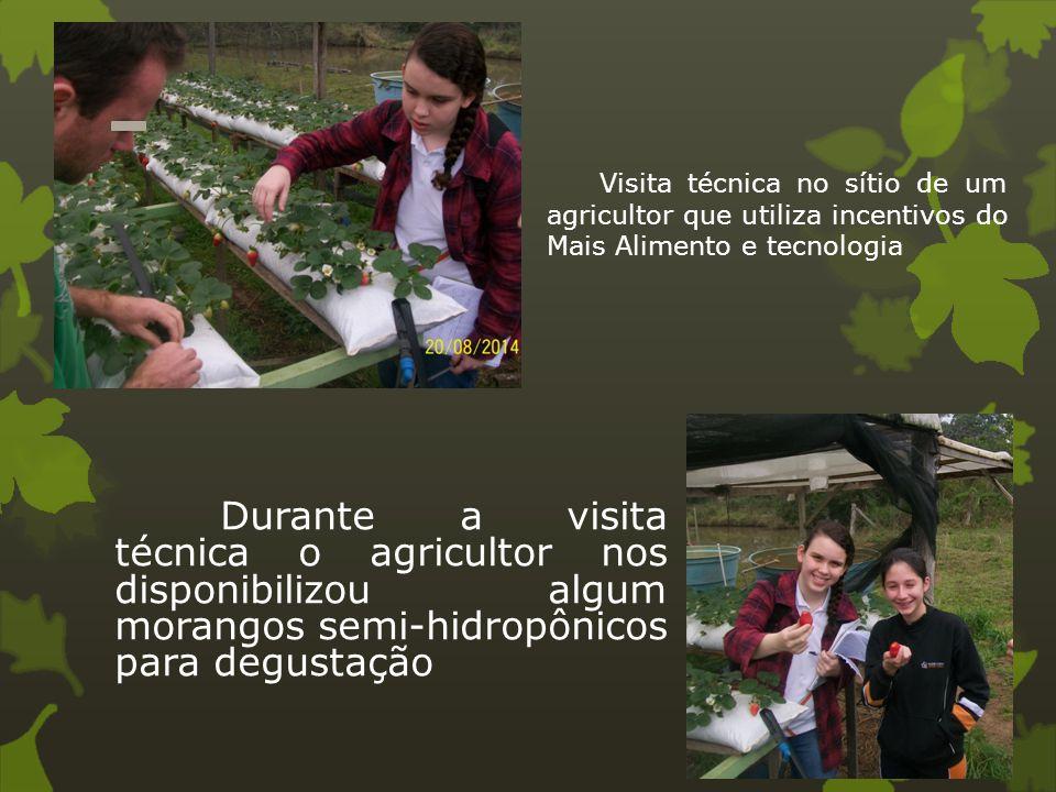 Visita técnica no sítio de um agricultor que utiliza incentivos do Mais Alimento e tecnologia