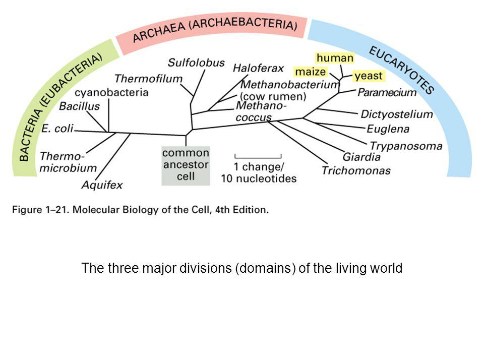 The three major divisions (domains) of the living world