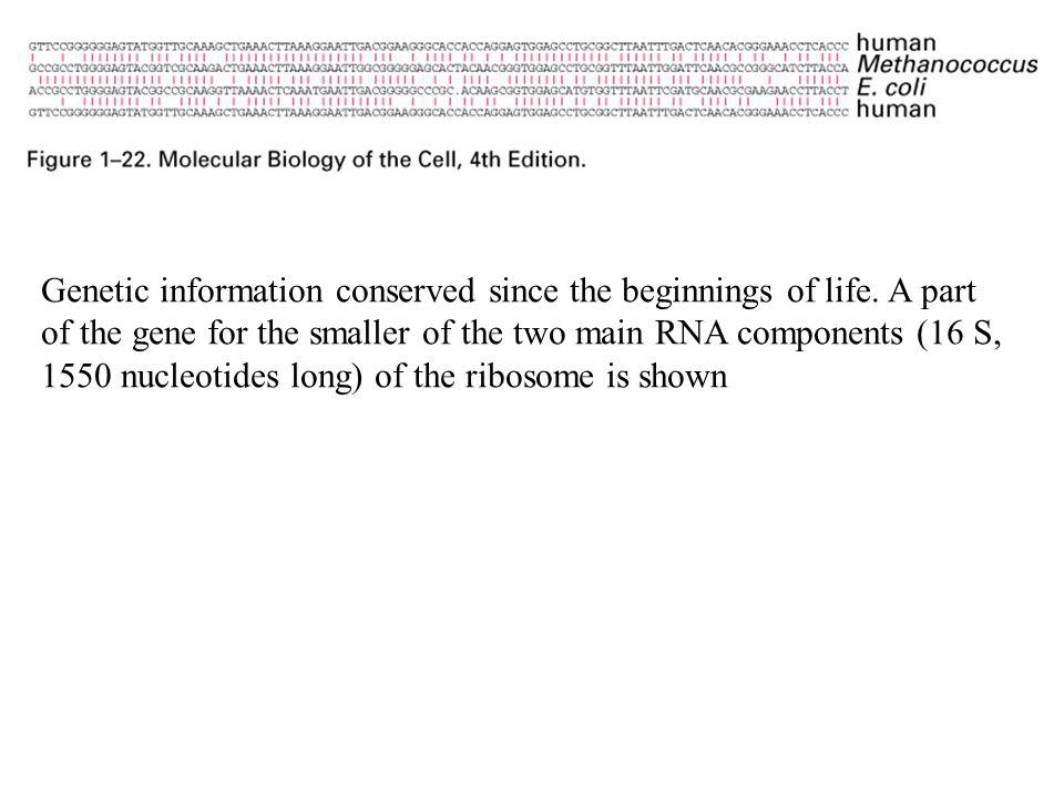 Genetic information conserved since the beginnings of life. A part