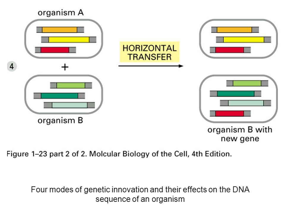 Four modes of genetic innovation and their effects on the DNA sequence of an organism