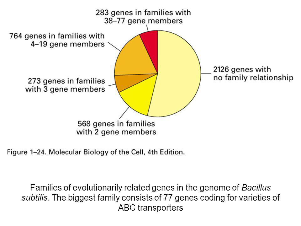 Families of evolutionarily related genes in the genome of Bacillus subtilis.