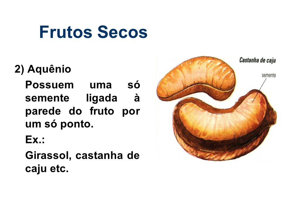 Frutos Secos 2) Aquênio. Possuem uma só semente ligada à parede do fruto por um só ponto.