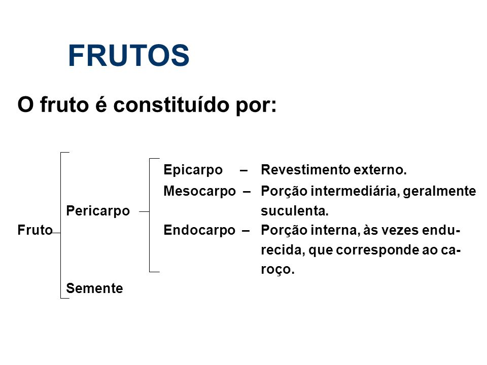 FRUTOS O fruto é constituído por: Epicarpo – Revestimento externo.