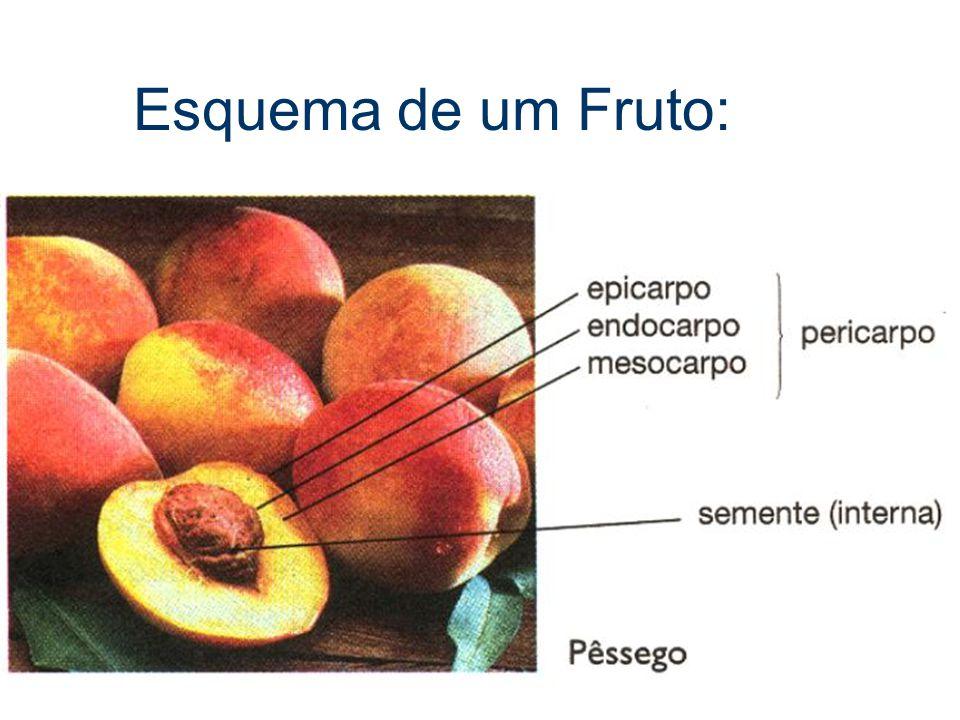 Esquema de um Fruto: