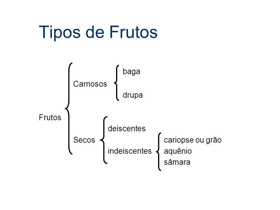 Tipos de Frutos baga Carnosos drupa Frutos deiscentes