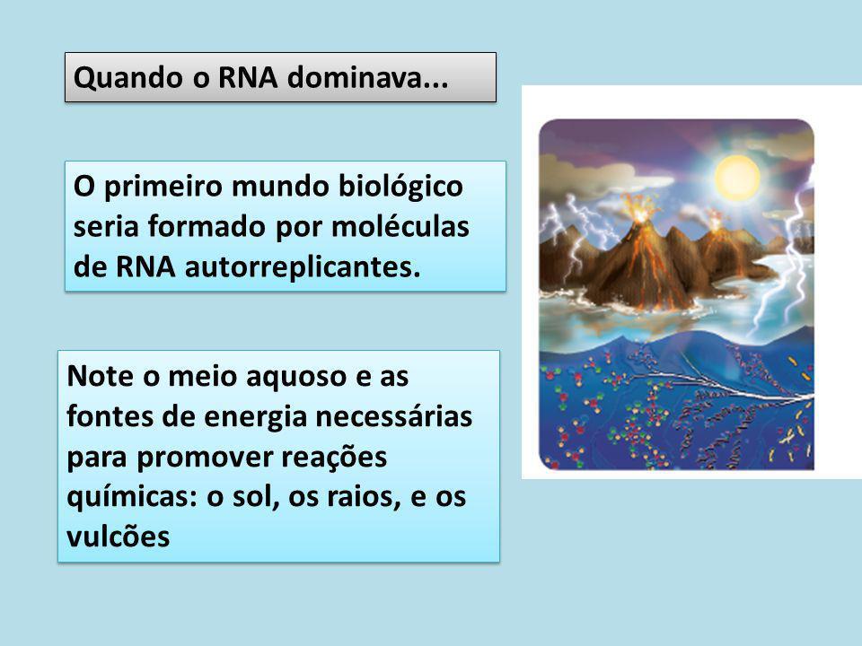 Quando o RNA dominava... O primeiro mundo biológico seria formado por moléculas de RNA autorreplicantes.