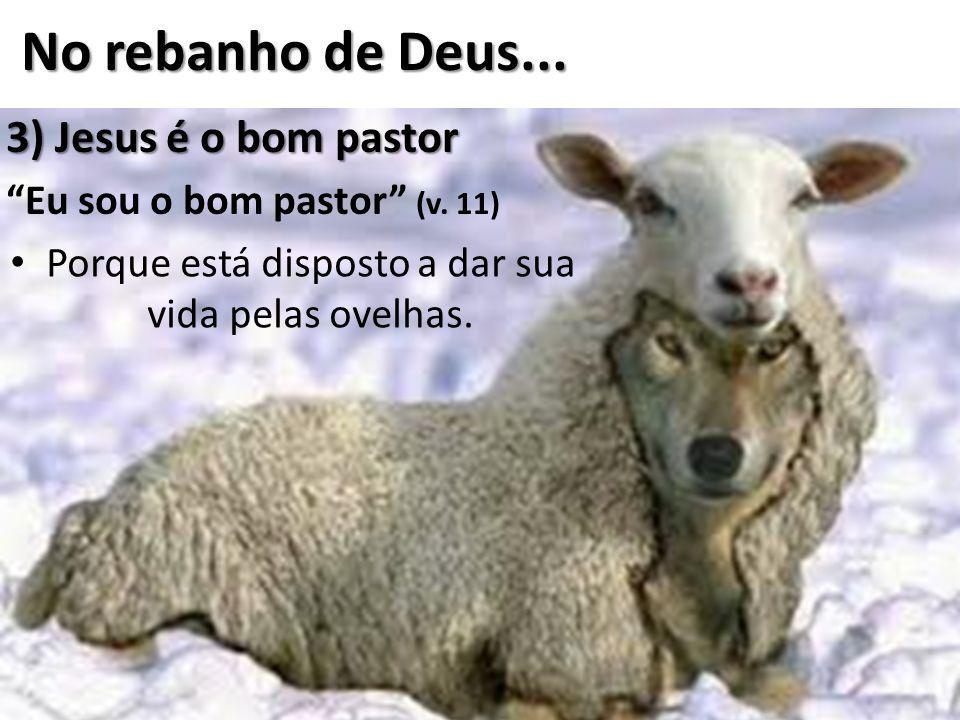 Porque está disposto a dar sua vida pelas ovelhas.