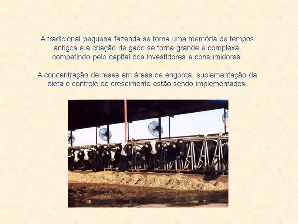 A tradicional pequena fazenda se torna uma memória de tempos antigos e a criação de gado se torna grande e complexa, competindo pelo capital dos investidores e consumidores.