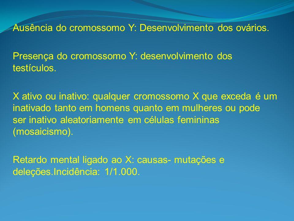 Ausência do cromossomo Y: Desenvolvimento dos ovários.