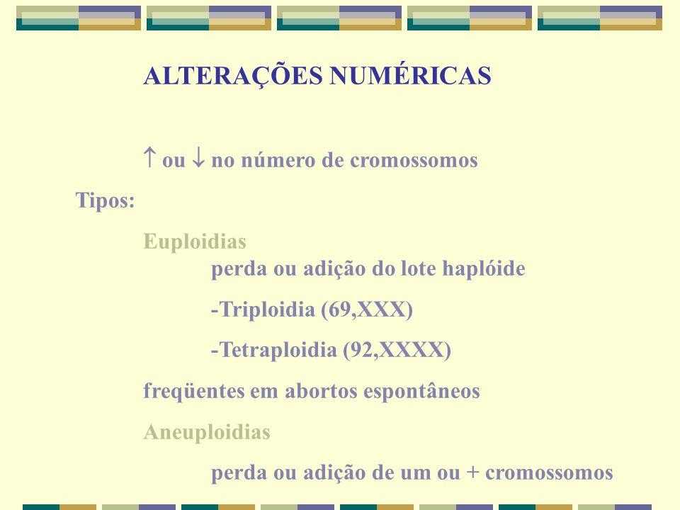 ALTERAÇÕES NUMÉRICAS  ou  no número de cromossomos. Tipos: Euploidias perda ou adição do lote haplóide.