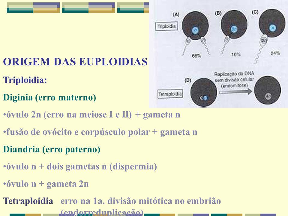 ORIGEM DAS EUPLOIDIAS Triploidia: Diginia (erro materno)