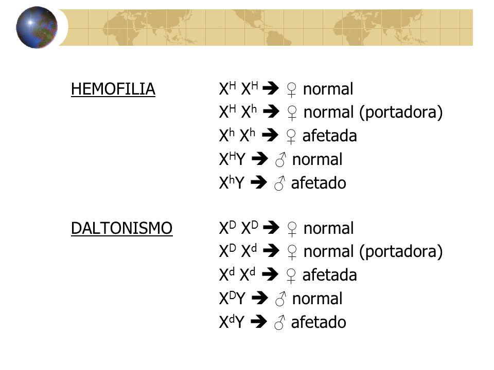 HEMOFILIA XH XH  ♀ normal