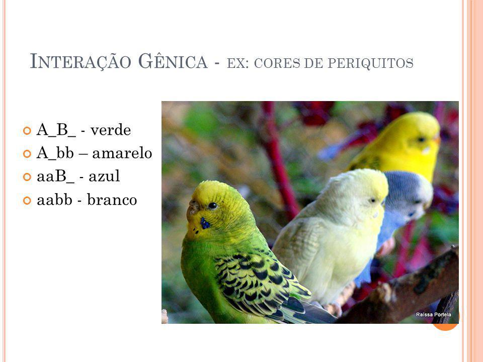 Interação Gênica - ex: cores de periquitos