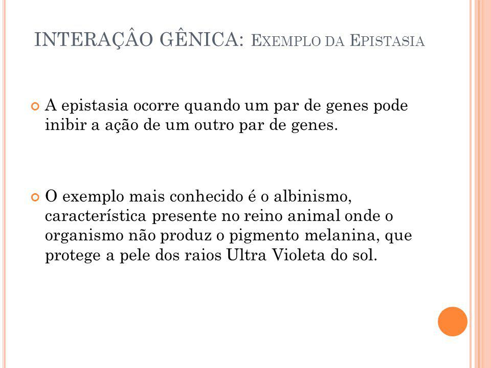 INTERAÇÂO GÊNICA: Exemplo da Epistasia