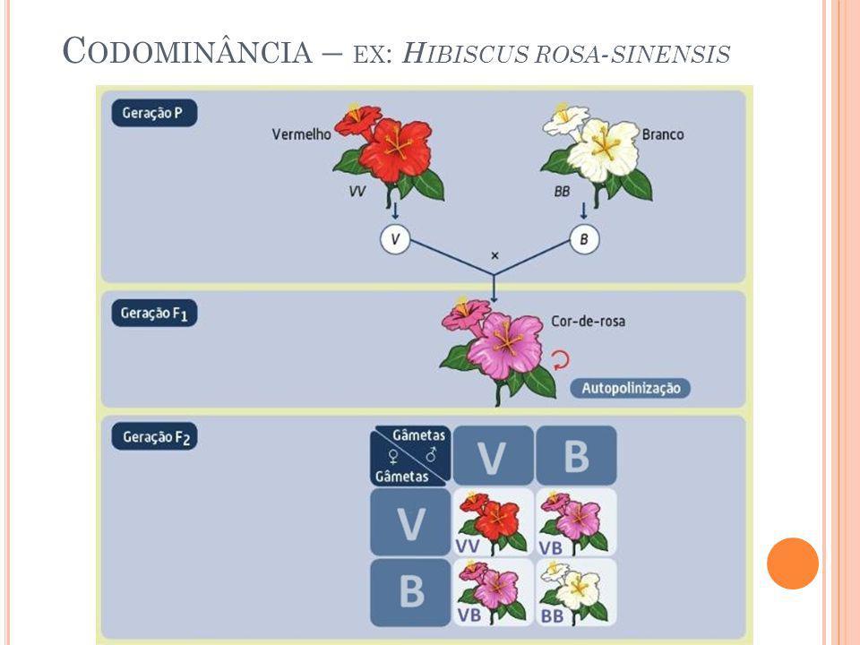 Codominância – ex: Hibiscus rosa-sinensis