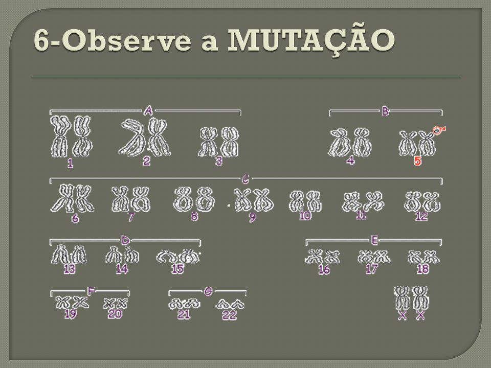 6-Observe a MUTAÇÃO