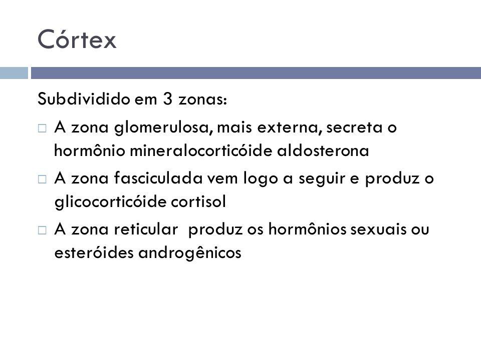 Córtex Subdividido em 3 zonas: