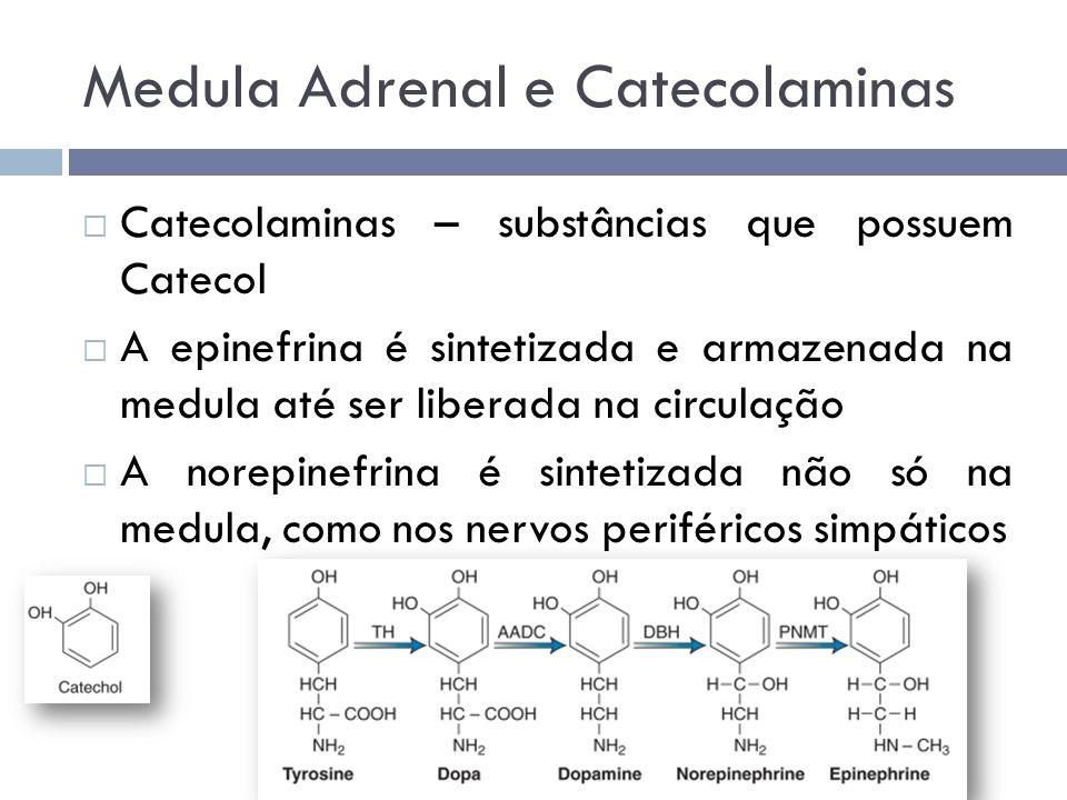 Medula Adrenal e Catecolaminas