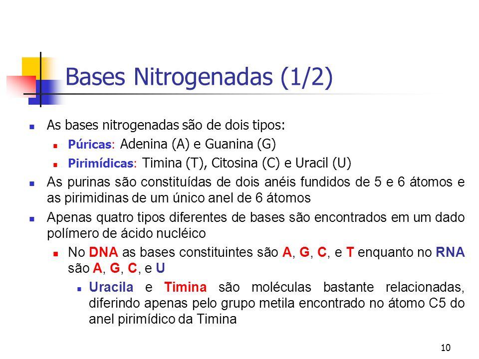 Bases Nitrogenadas (1/2)