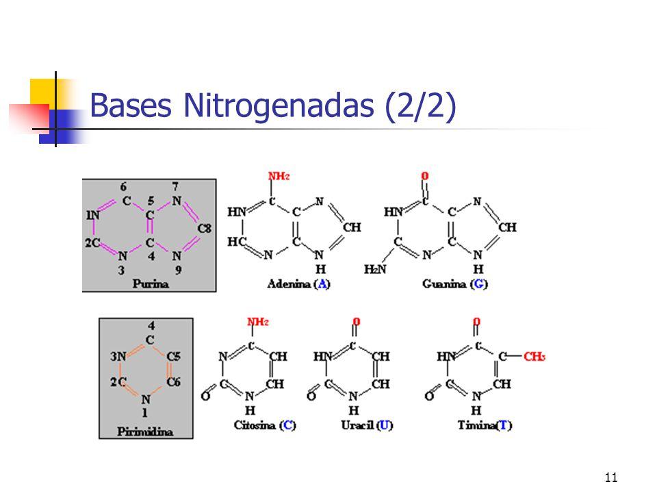 Bases Nitrogenadas (2/2)