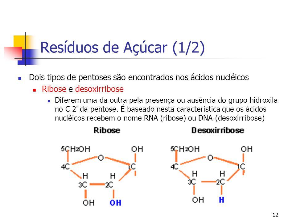 Resíduos de Açúcar (1/2) Dois tipos de pentoses são encontrados nos ácidos nucléicos. Ribose e desoxirribose.