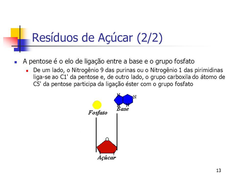 Resíduos de Açúcar (2/2) A pentose é o elo de ligação entre a base e o grupo fosfato.