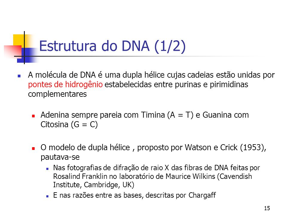 Estrutura do DNA (1/2)