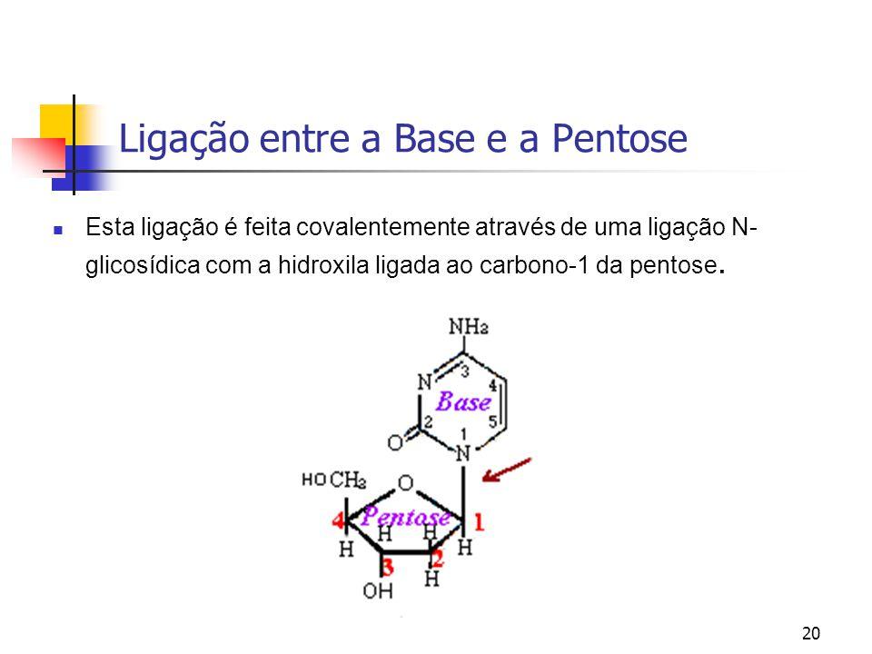 Ligação entre a Base e a Pentose
