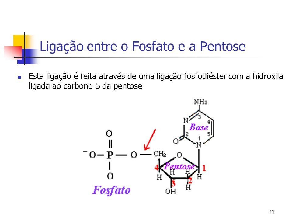 Ligação entre o Fosfato e a Pentose
