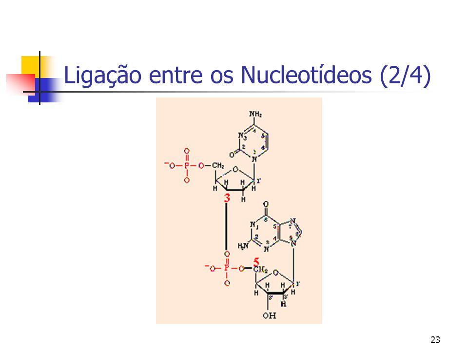 Ligação entre os Nucleotídeos (2/4)