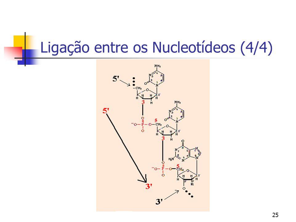 Ligação entre os Nucleotídeos (4/4)