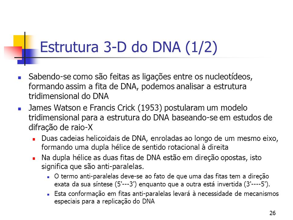 Estrutura 3-D do DNA (1/2)
