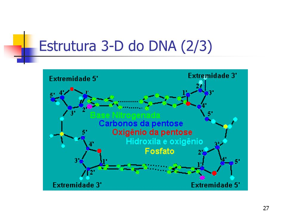 Estrutura 3-D do DNA (2/3)