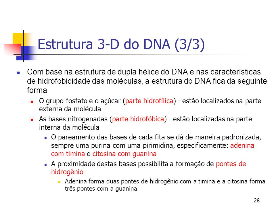 Estrutura 3-D do DNA (3/3)