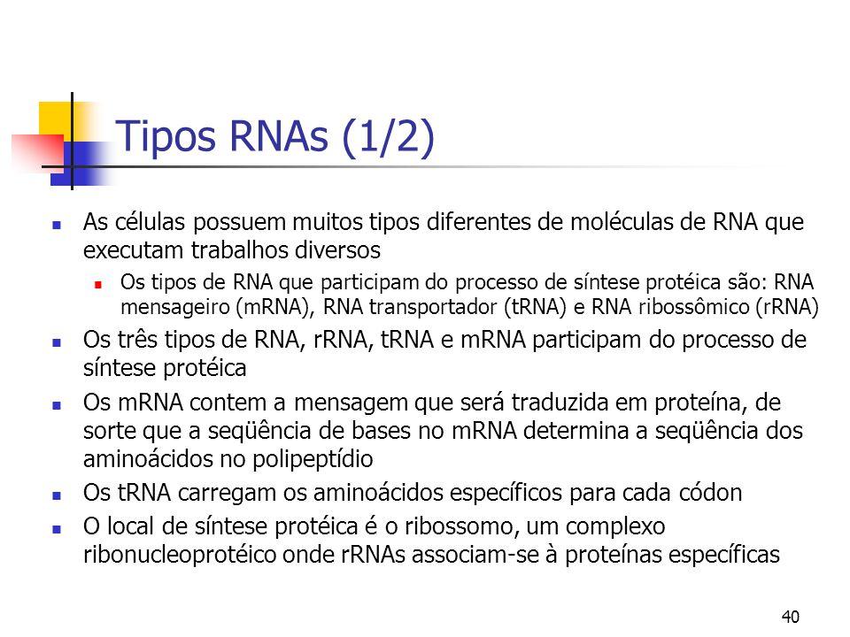 Tipos RNAs (1/2) As células possuem muitos tipos diferentes de moléculas de RNA que executam trabalhos diversos.