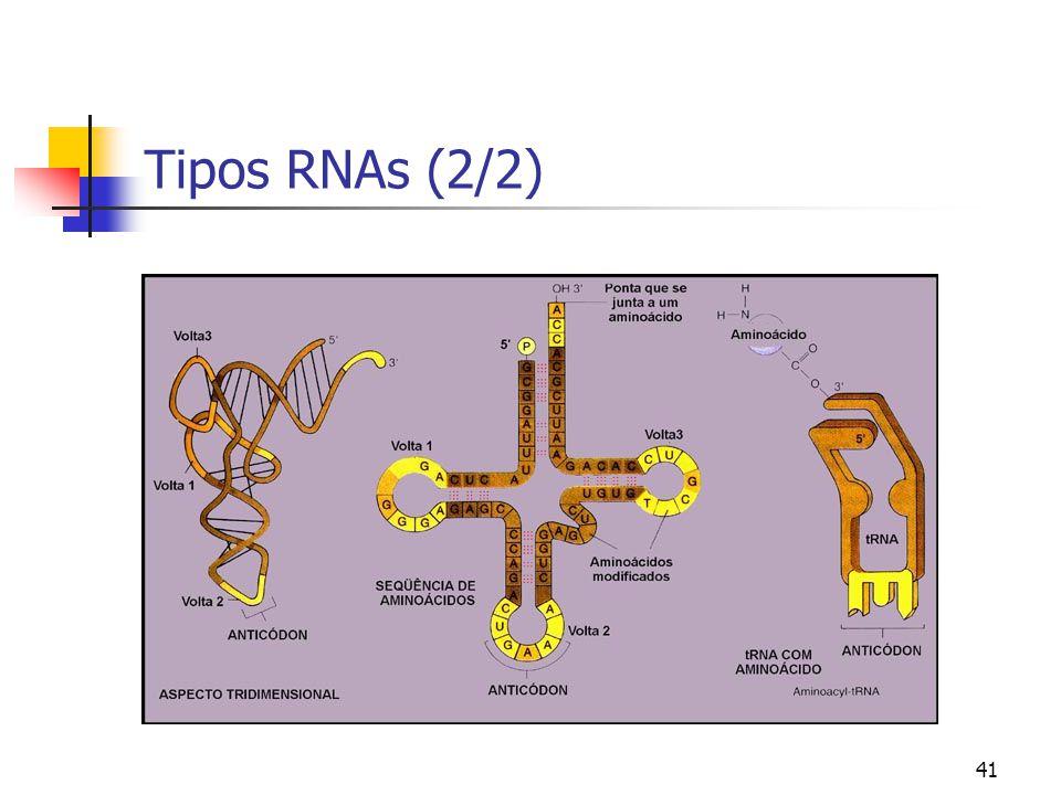 Tipos RNAs (2/2)